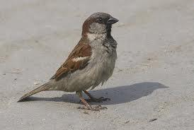 Заказать Отпугивание птиц
