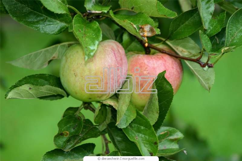 Заказать Услуги агрономического сопровождения садов, виноградников и лесопарковых насаждений