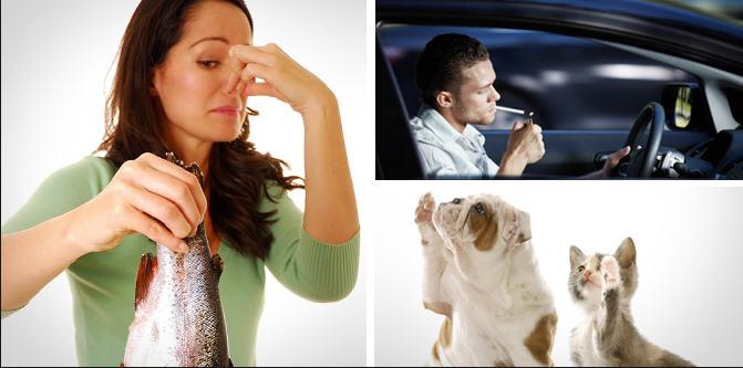 Дезодорация помещений. Устранение неприятного запаха.