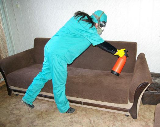 Дезинсекция помещений. Борьба с клопами в комнате общежития