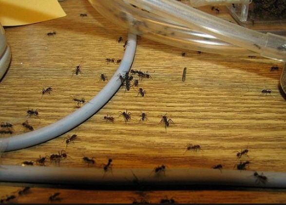 Дезинсекция. Дезинфекция. Дератизация. Очистка от инфекций, насекомых и грызунов.