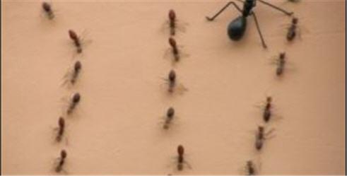 Дезинсекция. Уничтожение муравьев, вредных насекомых в квартире или доме.