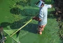 Заказать Очистка прудов