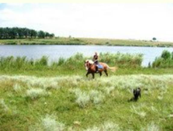 Заказать Конные прогулки. Одесская область, Великодолинское, Большая Долина