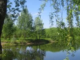 Заказать Устройство прудов, ручьев и водопадов в саду
