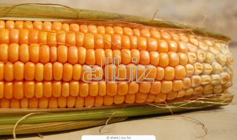 Заказать Уборка кукурузы, Киевская область.