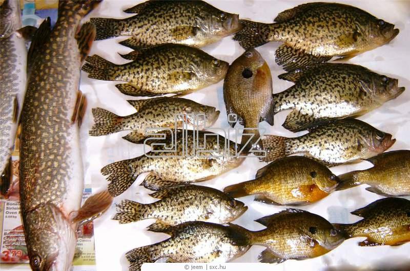 Заказать Доставка рыбы