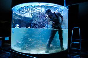 Заказать Обслуживание аквариума