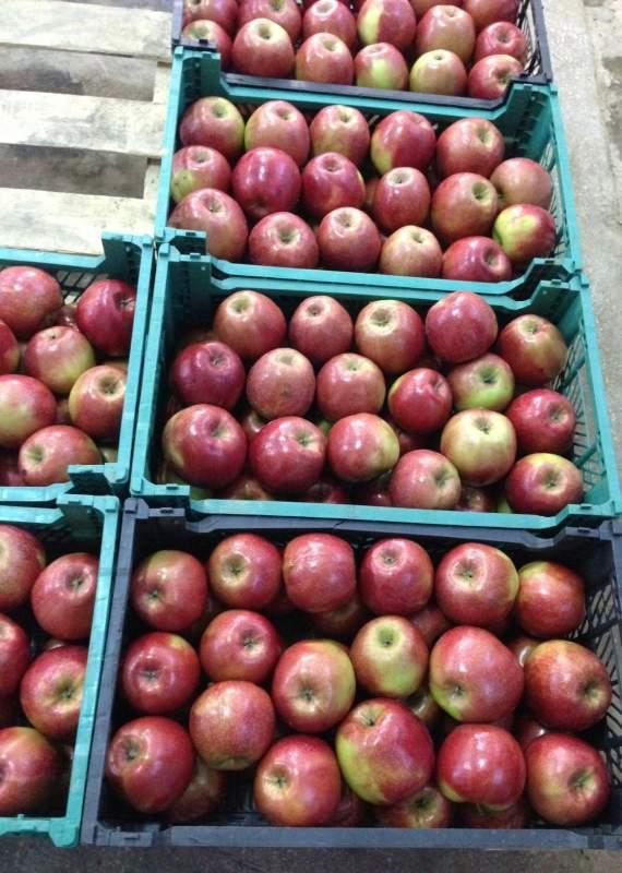 Заказать Мойка, сортировка яблок