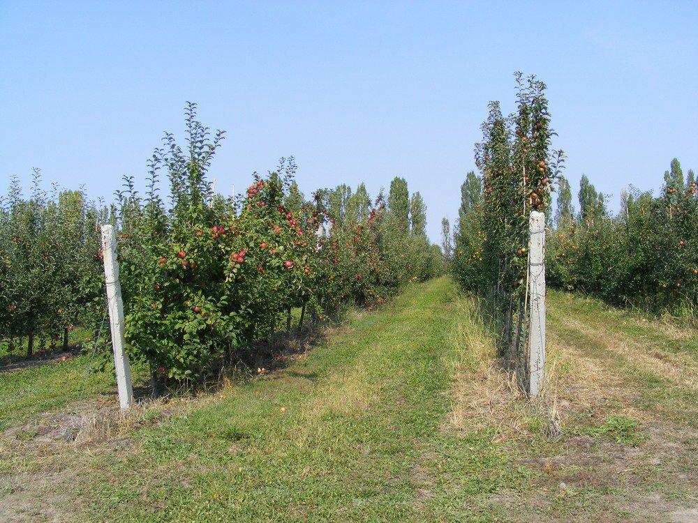 Заказать Консультация по вопросам садоводства и виноградарства с выездом на место.