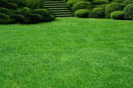 Заказать Устройство посевного газона