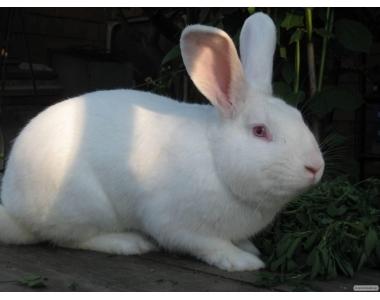 Заказать Купим кроликов живым весом,шкуру кролика