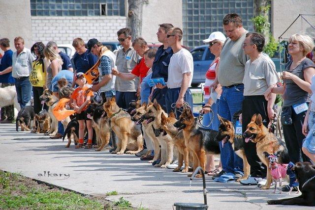 Заказать Шоу-выставки собак всех пород