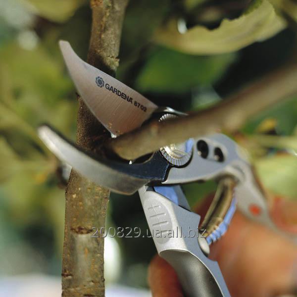 Заказать Обрезка плодовых деревьев и кустов. Догляд за садом (Комплексний)