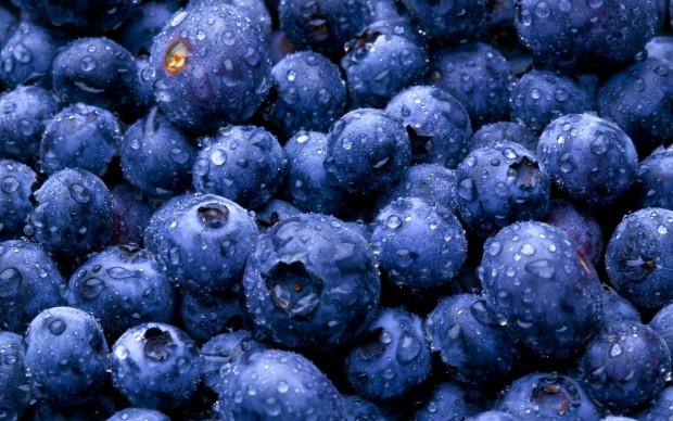 Заказать BLUEBERRIES IN UKRAINE - GOOD BUSINESS