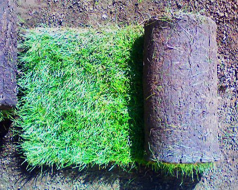Заказать Рулонный газон