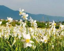 Заказать Тур в Закарпатье на 9 мая
