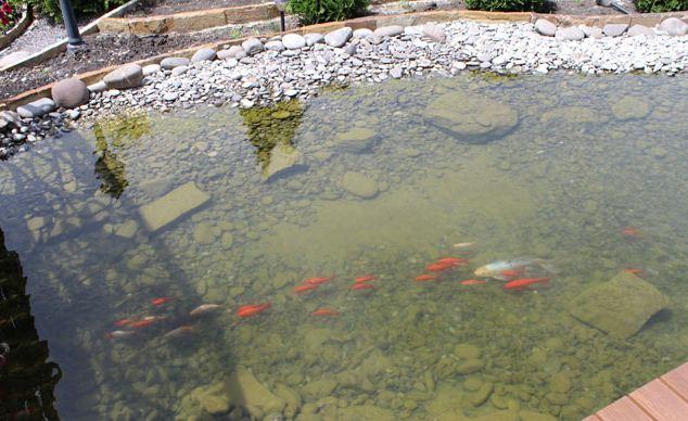 Заказать Создание искусственных водоемов