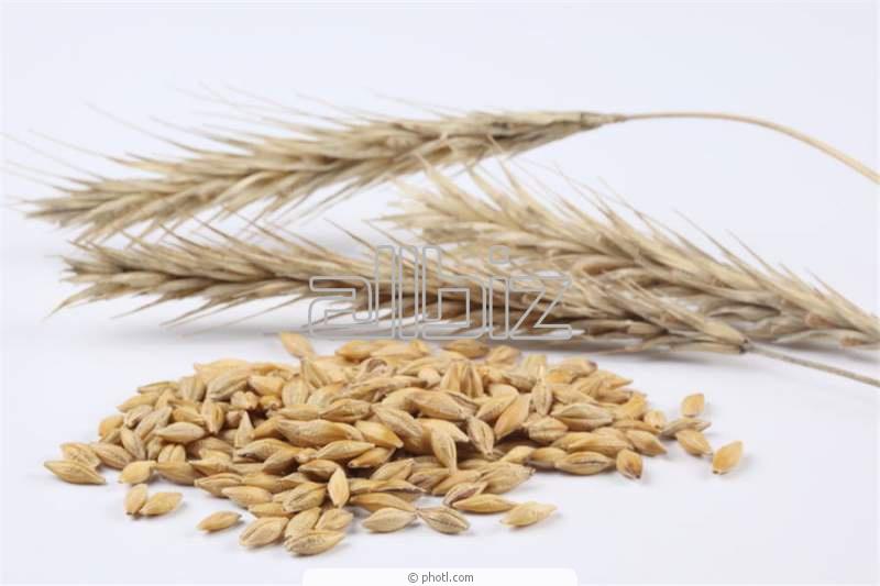 Заказать Заготовка, сушка, хранение семенного зерна