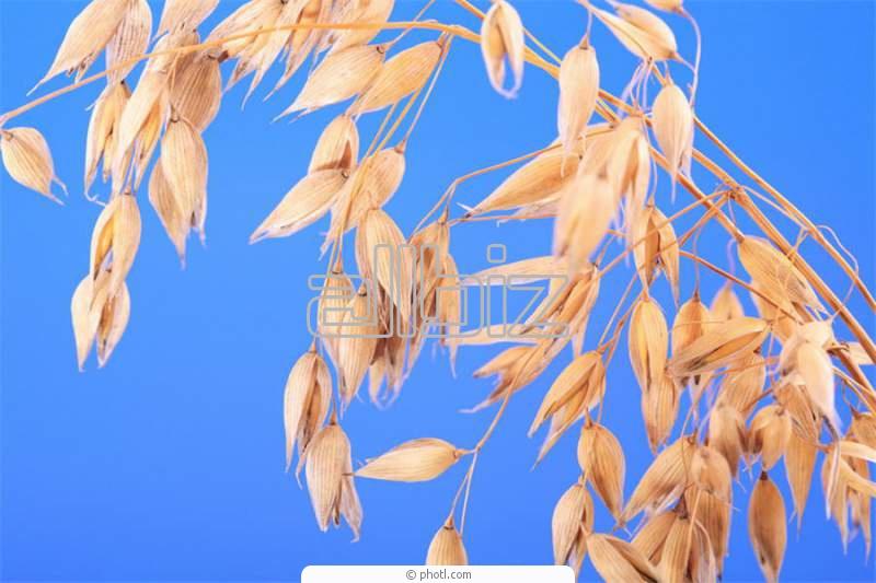 Заказать Выращивание семян сельскохозяйственных культур