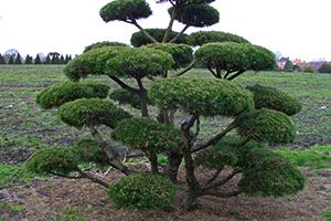 Замовити Посадка ексклюзивних рослин