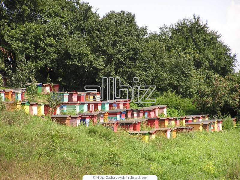 Заказать Разведение пчел в Ровно