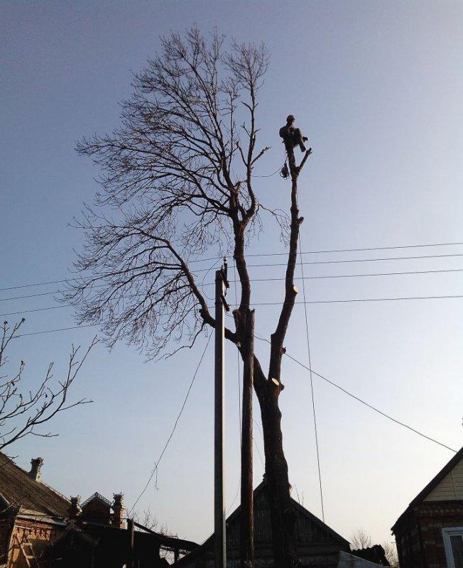 Заказать Спил аварийных деревьев в Харькове и области