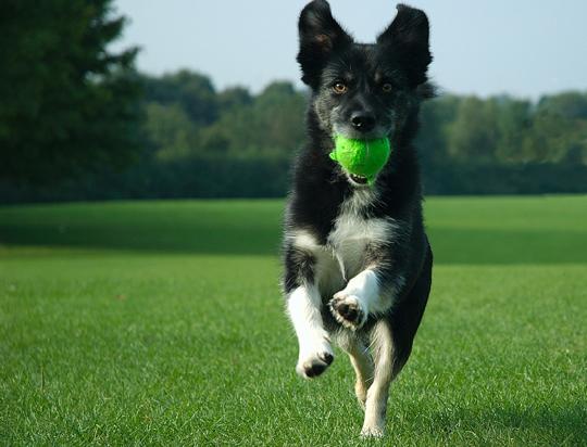 Заказать Дрессировка и воспитание собак, дрессировка собак, дрессировка служебных собак, дрессировка овчарок
