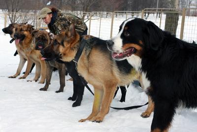 Заказать Дрессировка собак, дрессировка служебных собак, дрессировка овчарок, дрессировка собак Украина, дрессировка собак цена