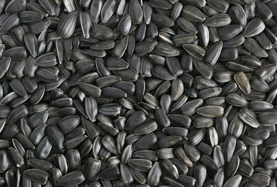 Заказать Закупка семян подсолнечника