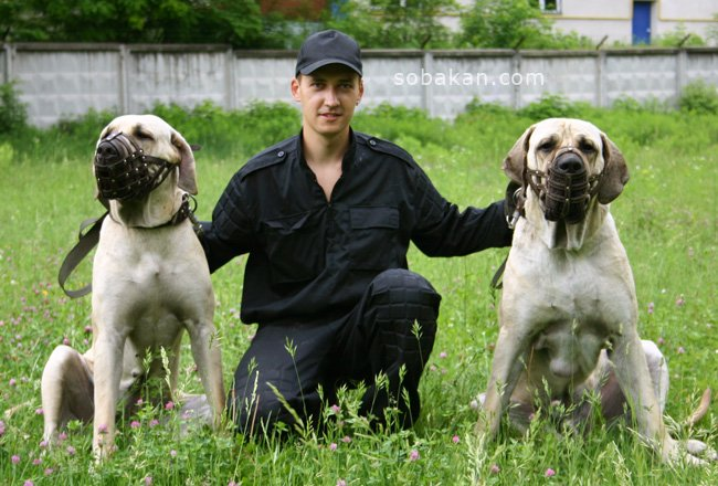 Заказать Консультация и обучение дрессировки собак