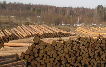 Заказать Погрузка и вывоз леса манипулятором