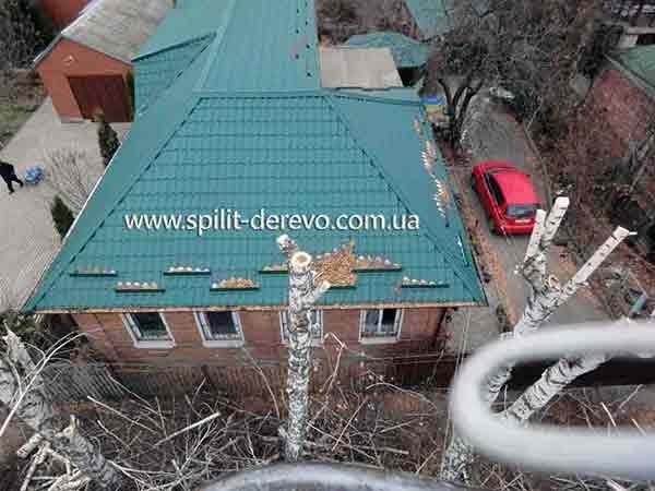 Заказать Спилить дерево в Харькове