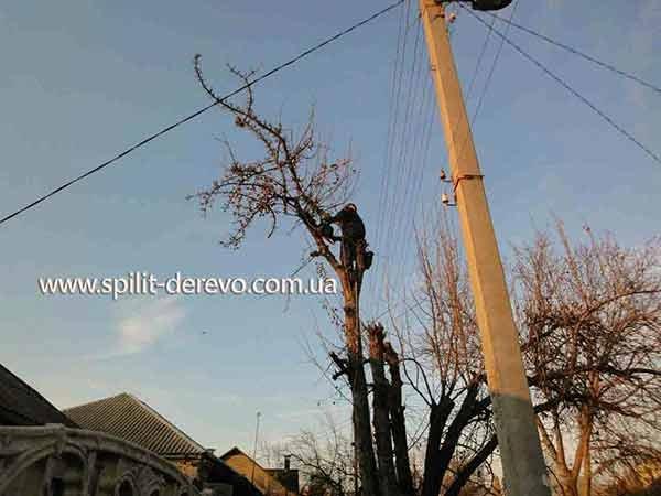Заказать Обрезка садовых деревьев в Харькове