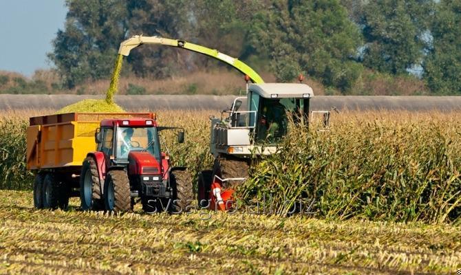 Заказать Услуги комбайна для уборки кукурузы