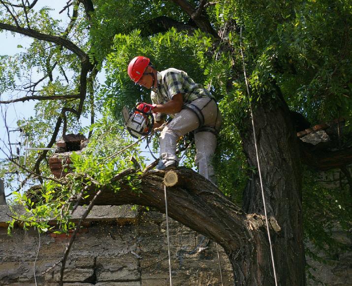 Заказать Кронирование деревьев