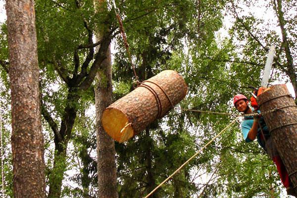 Заказать Удаление деревьев, насаждений
