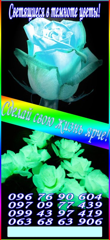 Заказать Светящиеся в темноте ЖИВЫЕ цветы!Доставка по Украине!