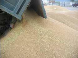 Заказать Производство зерна.