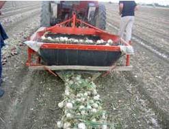 Заказать Выращивание овощных культур