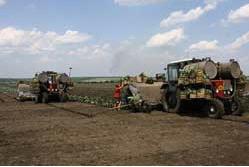 Заказать Выращивание картофеля
