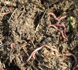 Заказать Услуга по удобрению почвы в саду