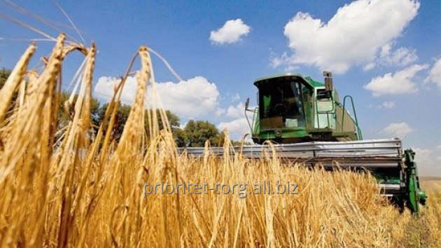 Заказать Услуги по уборке зерновых культур