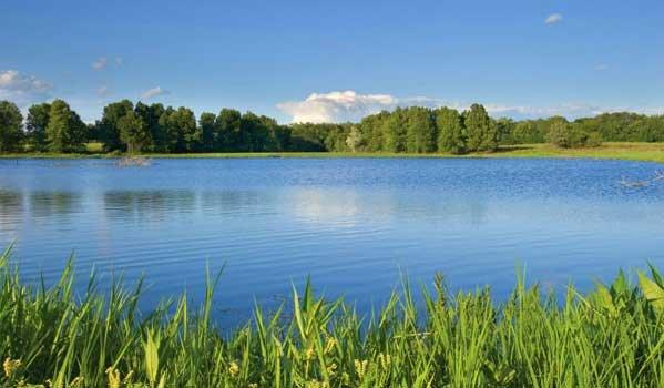 Заказать Содержание прудов и озер. Проведение технологических операций в рыбоводстве