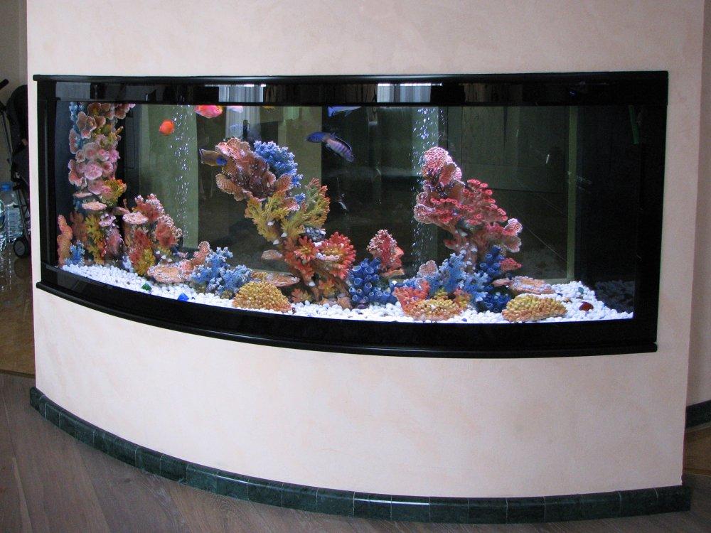 Заказать Обслуживание аквариума в Киеве и пригороде