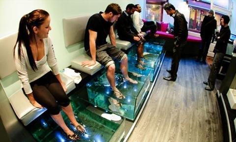 Заказать Изготовление аквариума для салона фиш спа системы (Fish SPA)