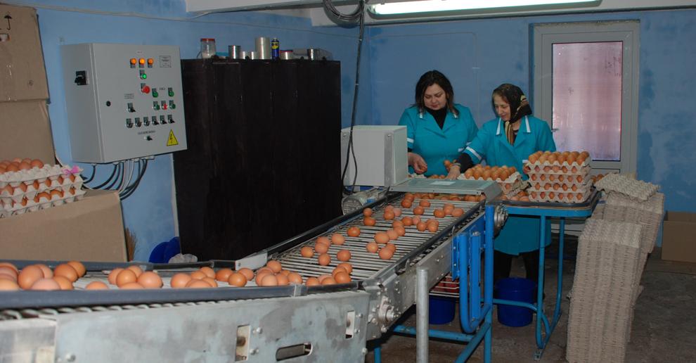 Заказать Курятина, готовые изделия яйца куринные