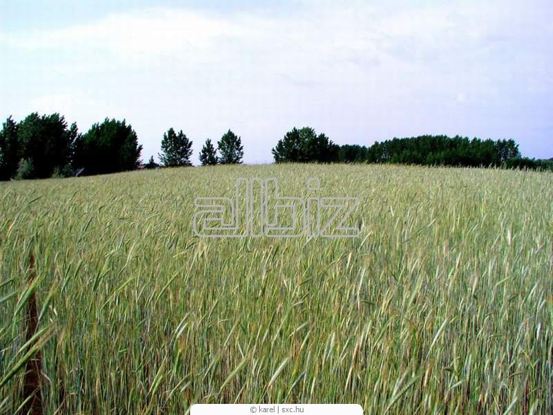Замовити Насінництво сільськогосподарських культур