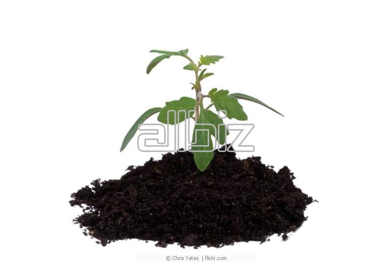 Замовити Проведення експертизи якості сільгосппродукції і сировини