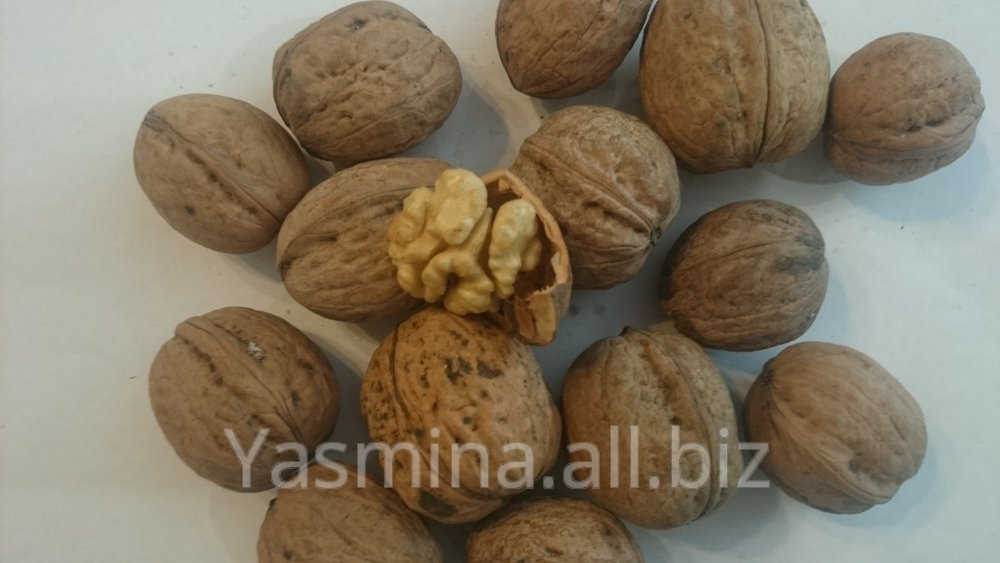 Processing and export of walnuts and pumpkin sunflower seeds